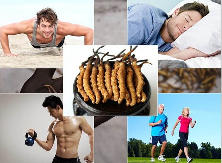 Thường xuyên sử dụng đông trùng hạ thảo giúp tăng sức khỏe